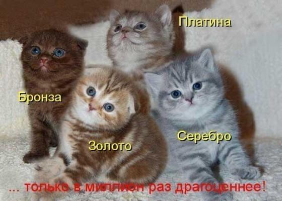 драгоценные котята золото серебро