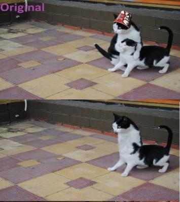 фотожаба два кота