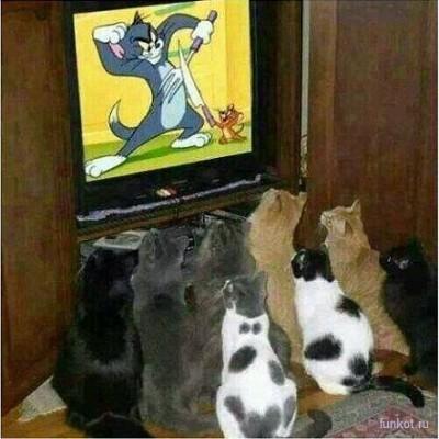 котята смотрят боевик по телеку