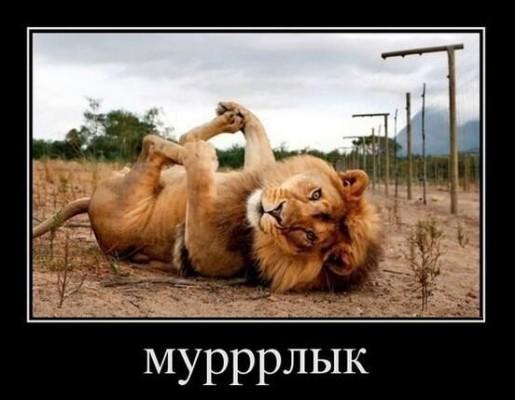 лев мурррлык