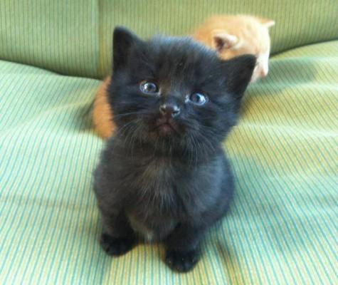 няшный котенок темный