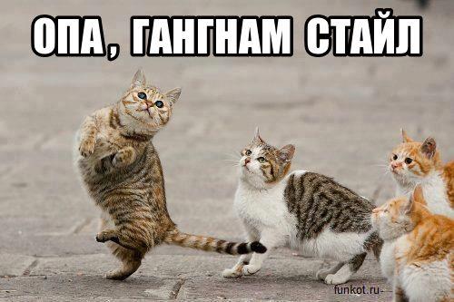 коты танцуют гангнам стайл