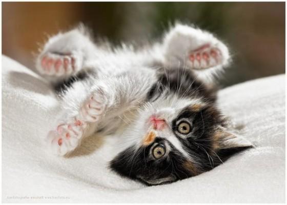 перевернутый котенок с лапками