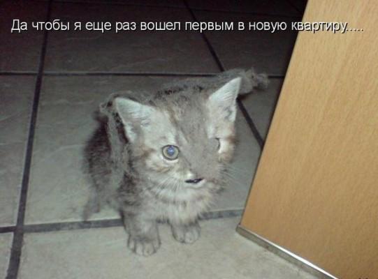 котенок в пыли и паутине