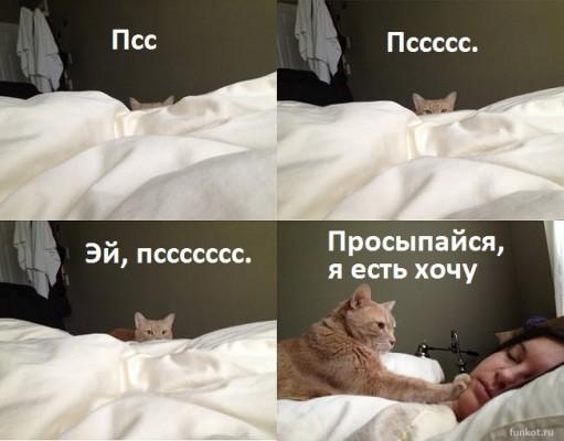 кот: просыпайся, я есть хочу