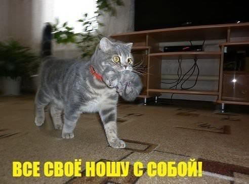 кошка - всё свое ношу с собой
