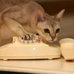 кот позвонил по телефону