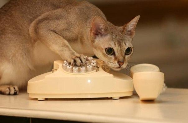 Фото кота в телефон