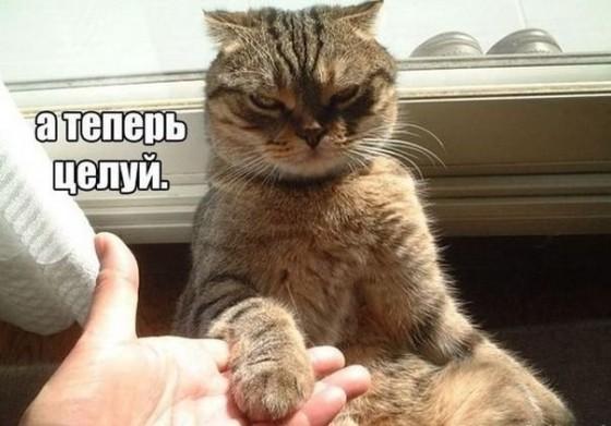 важный котик - ручку целуй