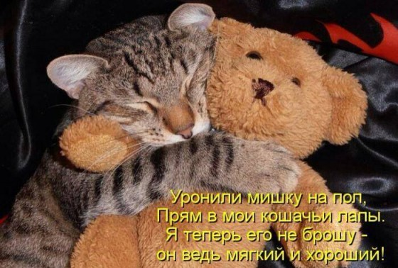 кот обнимает мягкую игрушку
