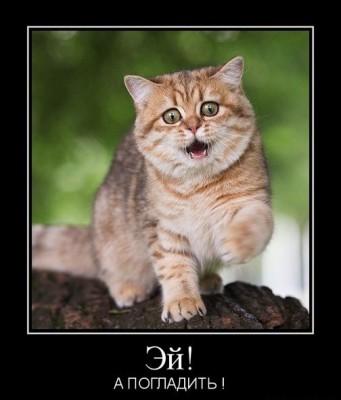 забыл погладить кота демотиватор