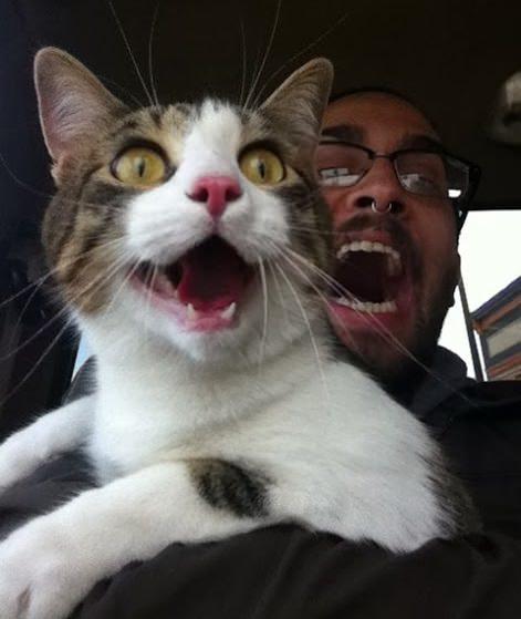 Прикольный кот открыл рот вместе с