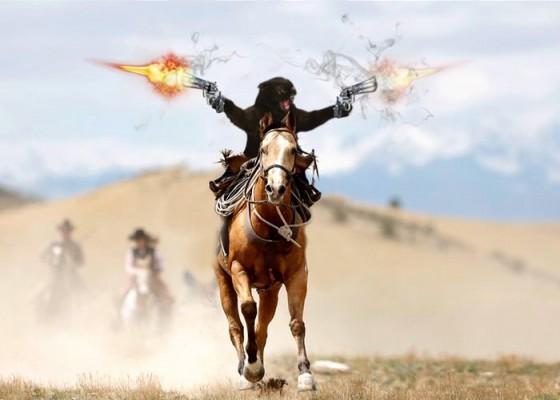 фотожаба - кот стреляет на лошади