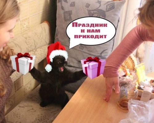 фотошоп кот праздник к нам приходит