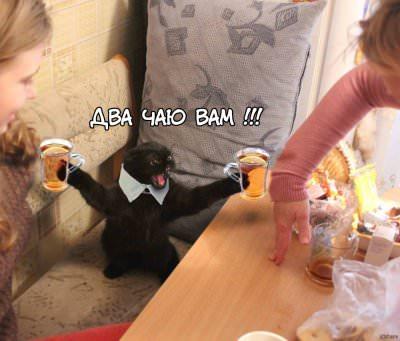 фотошоп кот дает два чая