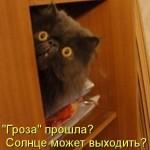 Смешные картинки котят с надписями