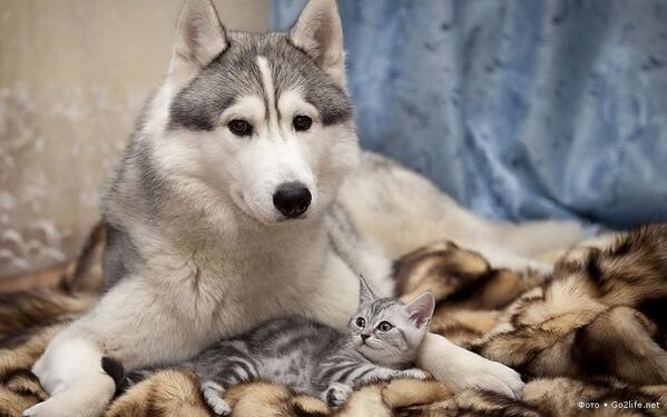 Кошка и собака — вместе навсегда 28