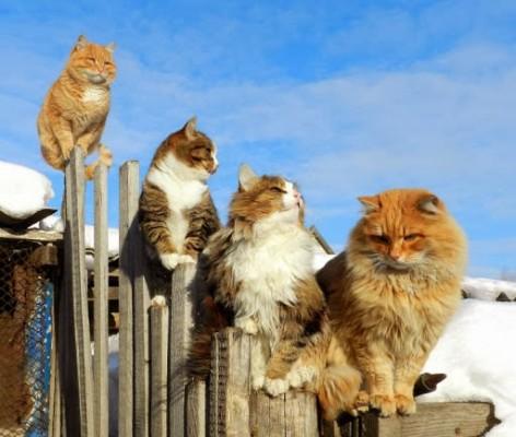 кошки на заборе