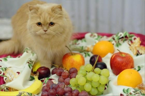 кот и фрукты