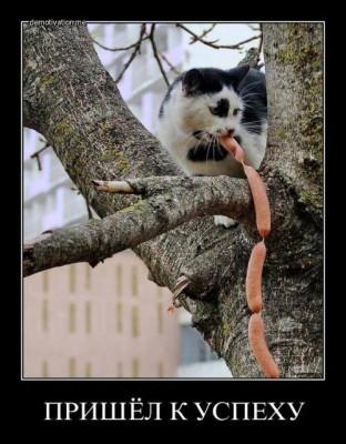 кот с сосисками на дереве