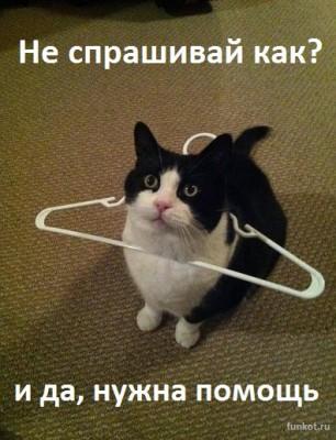 кот застрял в вешалке