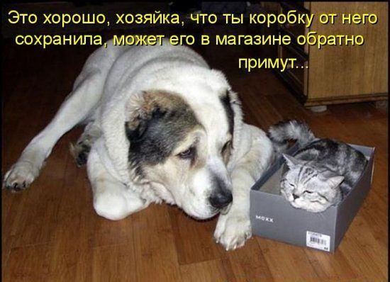 Очень смешные коты и собаки