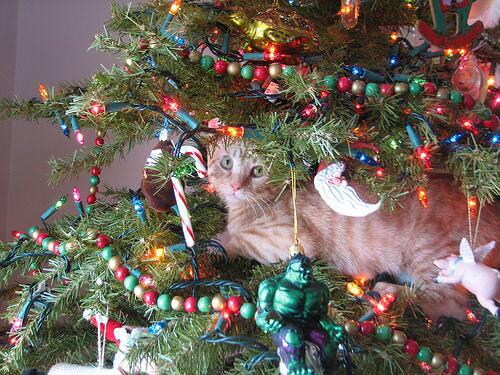 кот и новогодняя елка