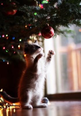 котенок тянется за елочной игрушкой
