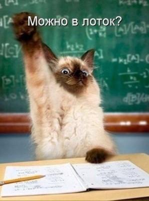 котенок школьник - можно в лоток