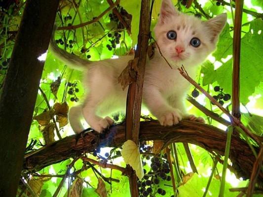 котенок в винограднике