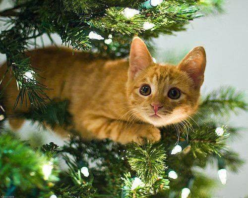 котик сидит на елке