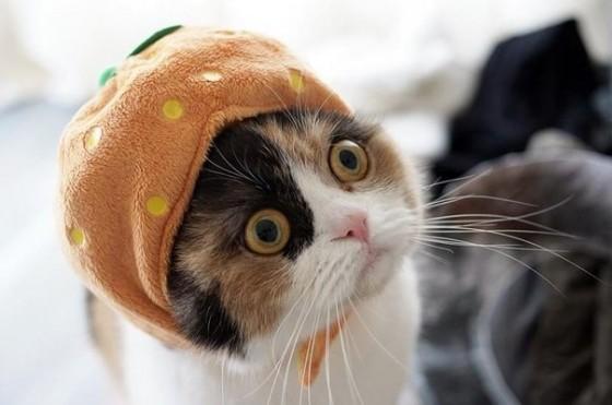 котик в шапочке удивленный