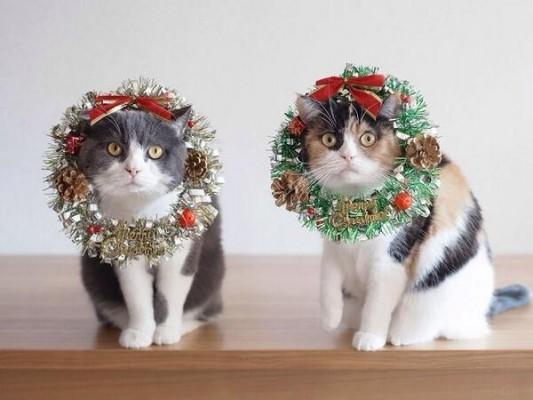 котики в новогодних веночках