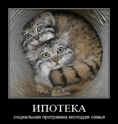 демотиватор - ипотека для семьи котов