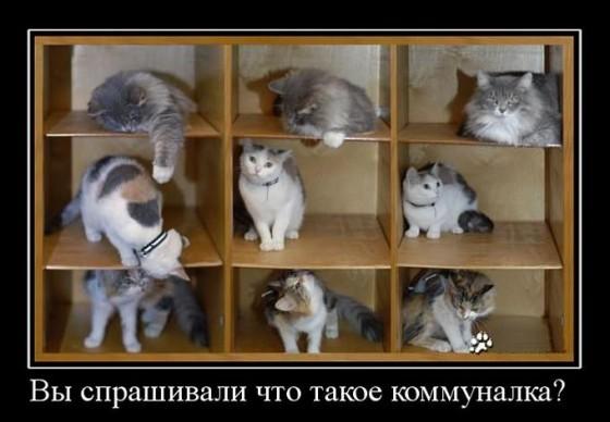 коммуналка для котов - демотиватор