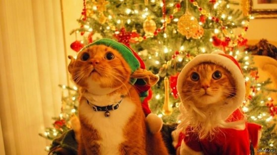 коты в новогодних колпаках
