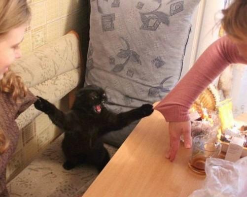 кот цепляет когтями двоих девушек
