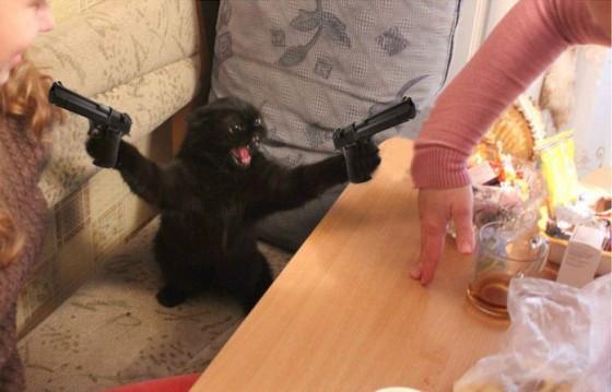 фотошоп - кот с пистолетами