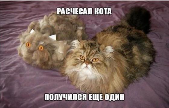 расчесал кота - получился еще один