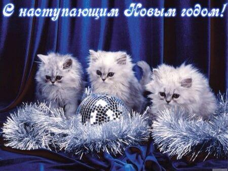 котики поздравляют с новым годом
