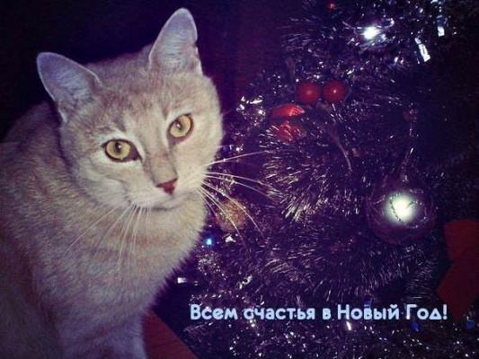 кот поздравляет с новым годом