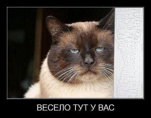 демотиватор кот - весело тут у вас
