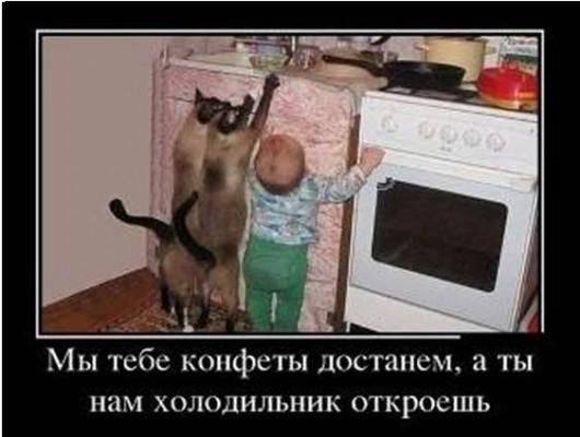Детям конфеты - котам мороженое