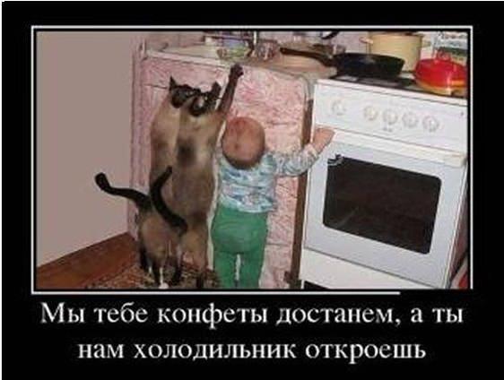 картинки с мамой кошкой и котятами