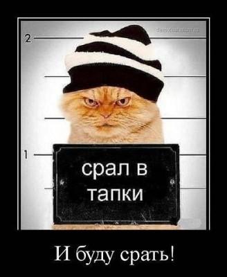 кот в тюрьме - срал в тапки