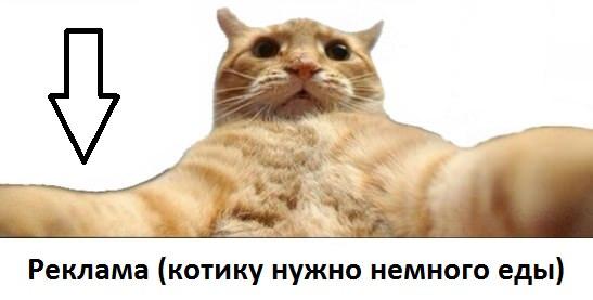 catsvill-reklama