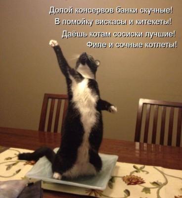 стих про кота - долой консервы скучные