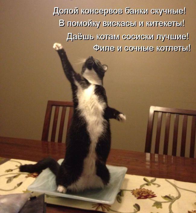 Стихотворение кота о хозяйке