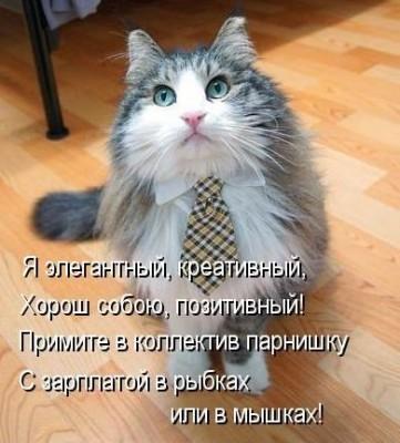 элегантный кот в галстуке