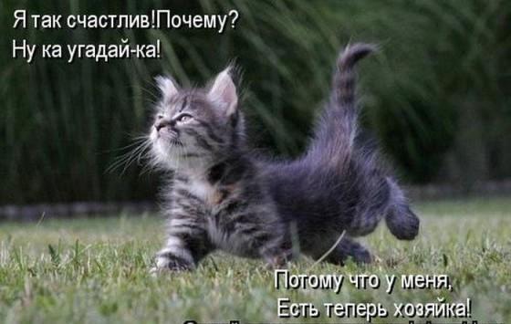 стишок про котенка - я так счастлив
